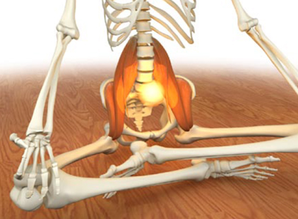 Nutrisystem exercises to strengthen hips muscles anatomy